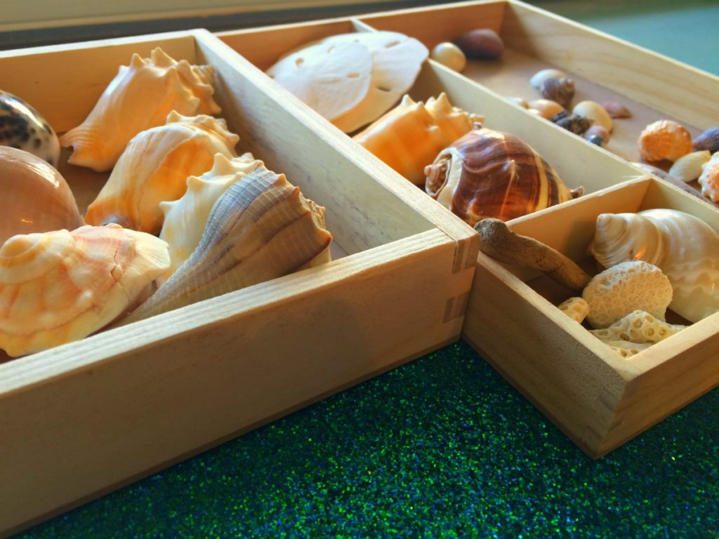 coastal-shells-for-art-display